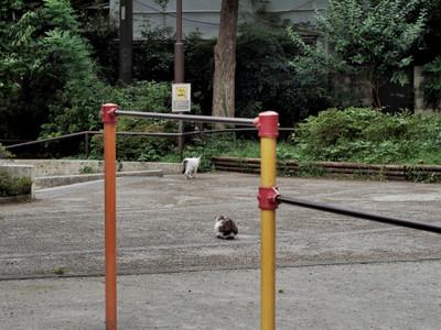 171007_kyoukaisenneko